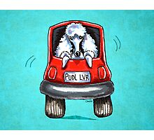 Poodle-Mobile Turquoise Photographic Print
