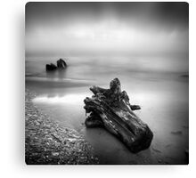 Driftwood washed up on shore Canvas Print