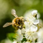 busy bee by ConnorTaylor
