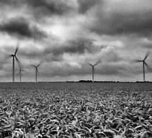 Windpower by Matthew Wall