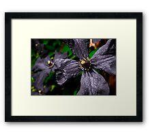 dull flower  Framed Print