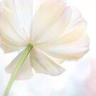 White Tulip by Beth Mason