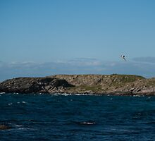 A swallow flying over the sea by Alexander Chesham
