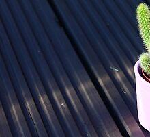 Mini Cactus by Hannah Taylor