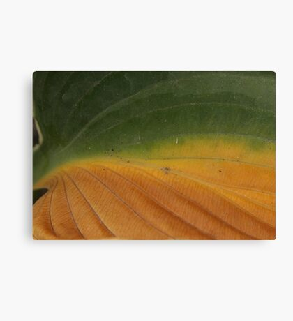 From Green To Gold Canvas Print
