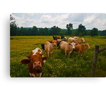 What's Up, Buttercup? Canvas Print