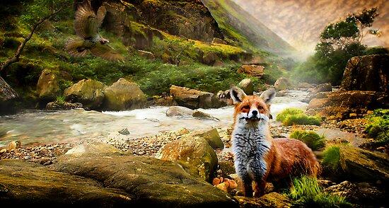 Hawk & Fox by Cliff Vestergaard
