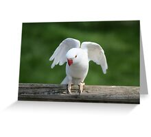 Pure white Indian Ringneck Greeting Card