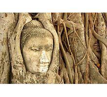 'Buddha Nature' Photographic Print