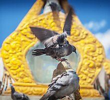 Pigeons by Ruben D. Mascaro