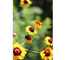 Colorful Photographic Print
