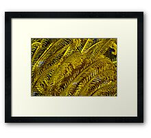 Yellow feathers Framed Print