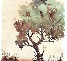 The lonely Black Wattle by Maree Clarkson