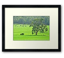 In the cow paddock Framed Print