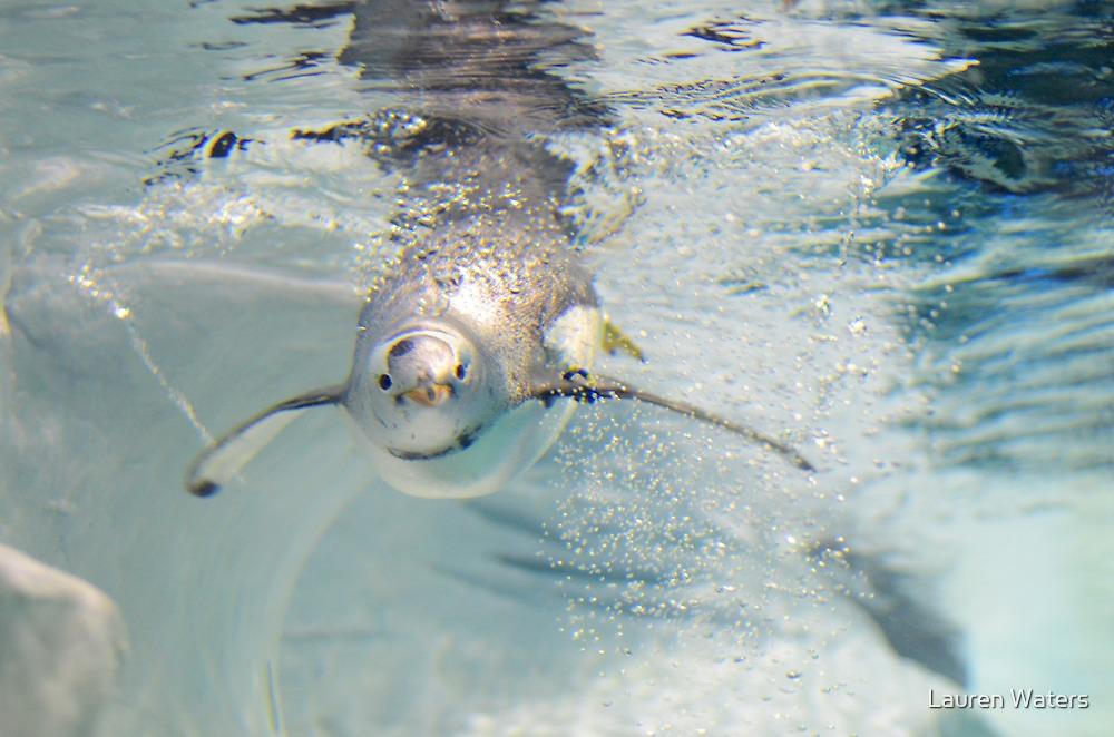 Penguin Bubbles by Lauren Waters