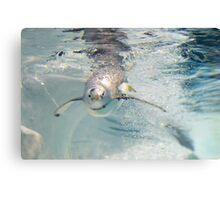 Penguin Bubbles Canvas Print