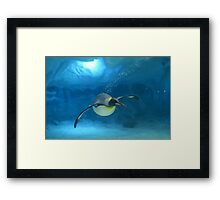 Penguin Blues Framed Print
