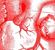 Oversized Anatomical Heart T-Shirt Sticker