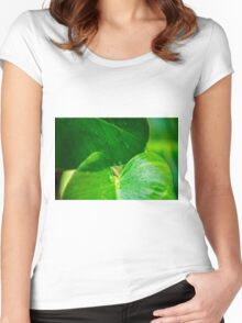Closeup of a leaf  Women's Fitted Scoop T-Shirt