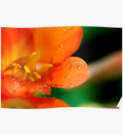 Closeup  of a flower Poster
