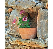 Greek Geranium Photographic Print