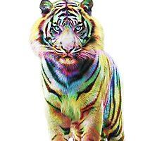 Tiger by Julien KALTNECKER