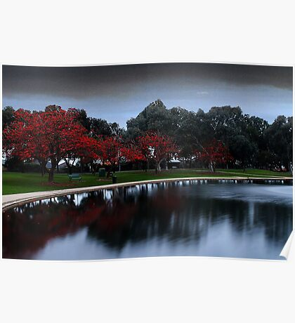 Erythrina Trees By The Lake  Poster