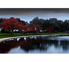 Erythrina Trees By The Lake  Photographic Print