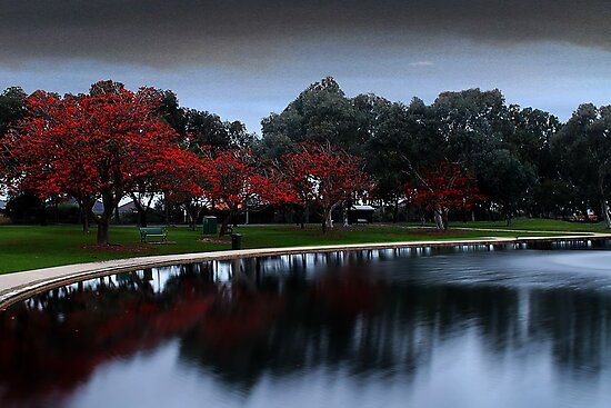 Erythrina Trees By The Lake  by EOS20