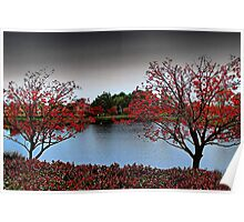 Erythrina Trees  Poster