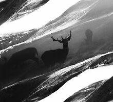 Oh Deer Black by stohitro