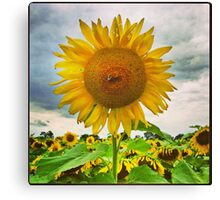 Stand Proud Canvas Print