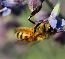 Busy Honey Bee by Keala