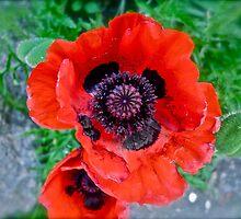 """Vail Summer Bloom"" by AlexandraZloto"