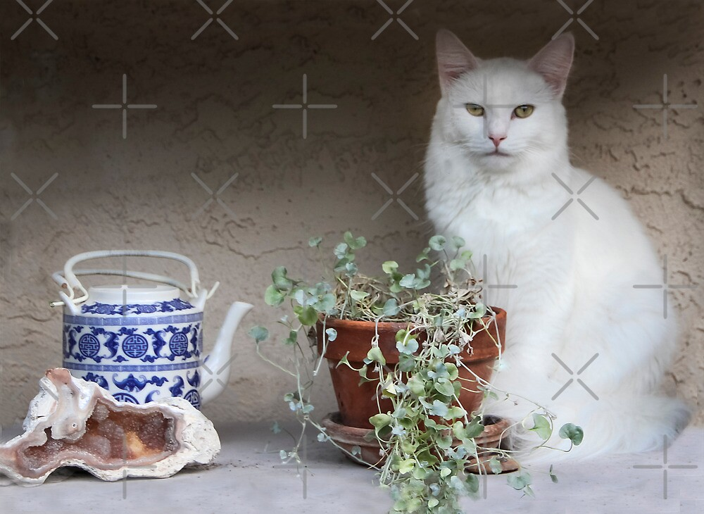Still Life With Cat by Heather Friedman