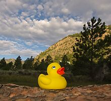 Rubber Ducky Sunrise by ozwille