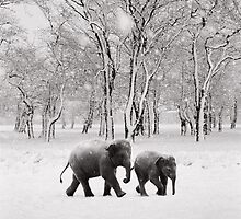 Elephants in the snow by Richard Alton