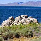 Rocks at Pyramid Lake Sutcliffe Nevada USA by Anthony & Nancy  Leake