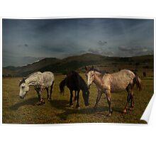 Wild Horses at Velebit Mountain Poster