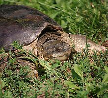 Snapping Turtle by Mark McReynolds