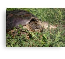 Snapping Turtle Metal Print