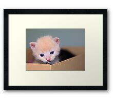 Blue eyed blond Framed Print