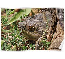 Snapping Turtle Head Poster