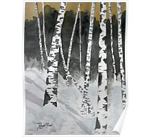 Birch tree art print Poster