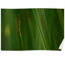 Slanted Green Poster