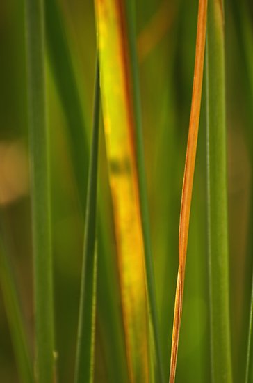 Reeds by photojeanic