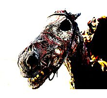 The Dead Horse Photographic Print