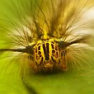caterpillar by davvi