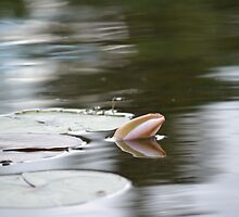 Closed Water Lily by MoniqueFlynn