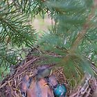 Little Robin in the Nest by gloriart